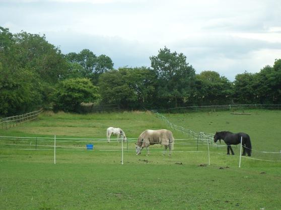 Horses_field
